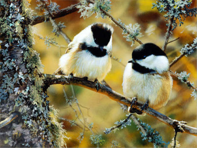 In The Black Black Capped Chickadees Carl Brenders