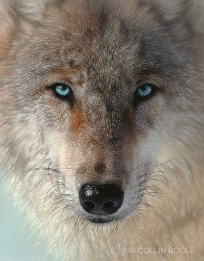 Inner Wolf Pack - Collin Bogle