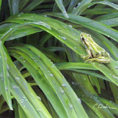 Joy Flush - Boreal Chorus Frog - Charity Dakin