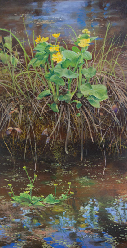 Joy Spring Marsh Marigold Charity Dakin