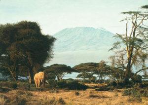 Kilimanjaro Morning Simon Combes