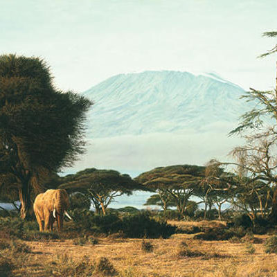 Kilimanjaro Morning Simon Combes