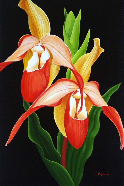 Lady Slipper Orchid - Dennis Magnusson