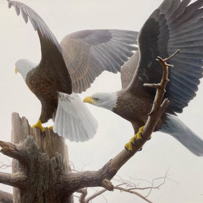 Landings - Bald Eagle - Robert Bateman