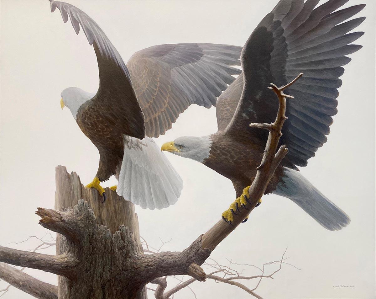 Landings - Bald Eagle - Robert Bateman