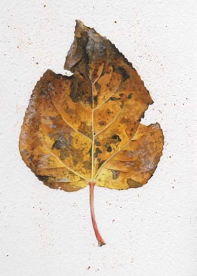 Last Leaf - Poplar - Charity Dakin
