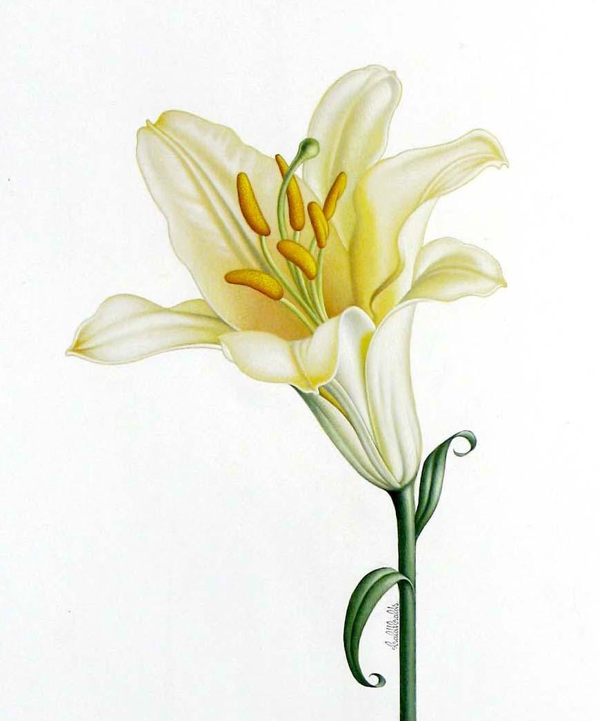 Lily - Braldt Bralds