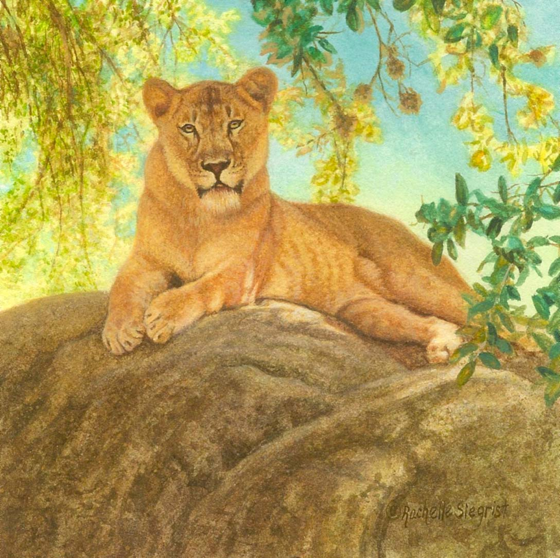 lion in the shade picture this framing gallery. Black Bedroom Furniture Sets. Home Design Ideas