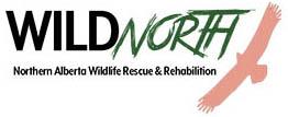Logo - Wild North