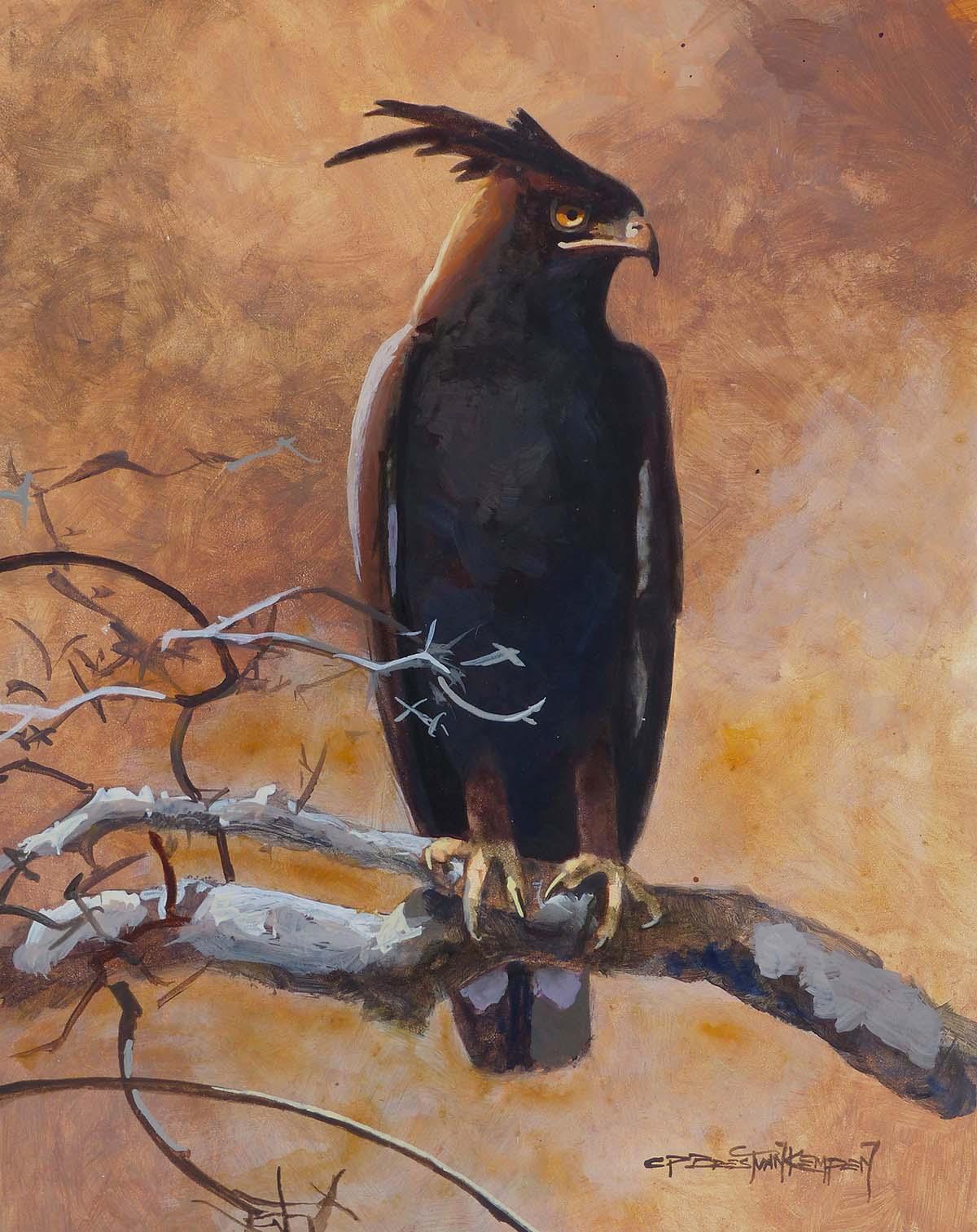 Long-Crested Eagle Study - Carel Brest van Kempen