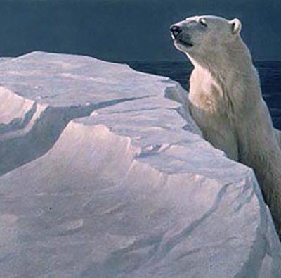 Long Light - Polar Bear - Robert Bateman