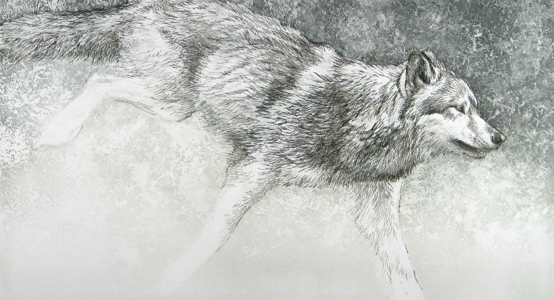 Loping Wolf - Etching - Robert Bateman