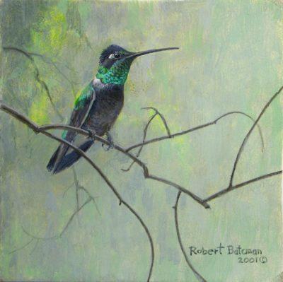 Magnificent Hummingbird - Robert Bateman