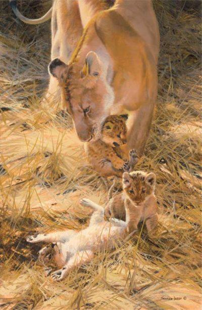 Marsh Lions A New Generation John Seerey Lester