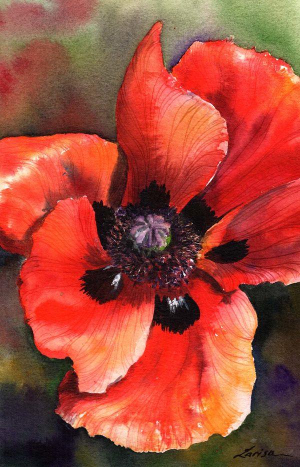 Midsummer Poppy - Larisa Cheladyn