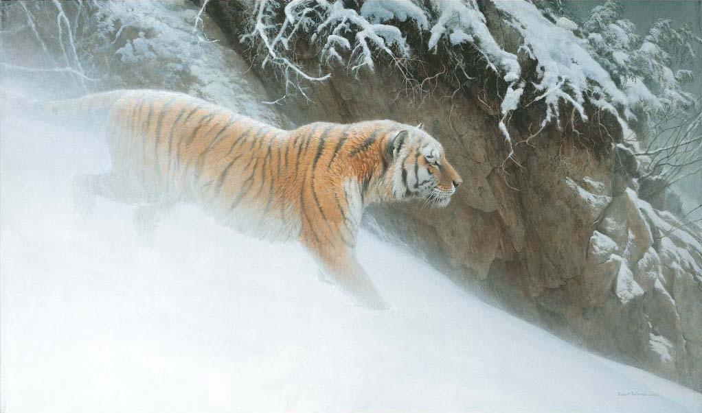 Momentum - Siberian Tiger - Robert Bateman