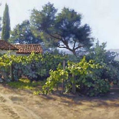 Monterey Vineyard June Carey