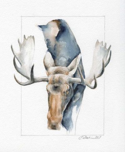 Moose Head Study - Charity Dakin