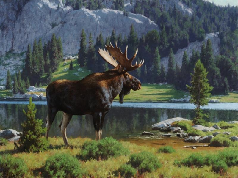 Moose At Dean Lake Tucker Smith