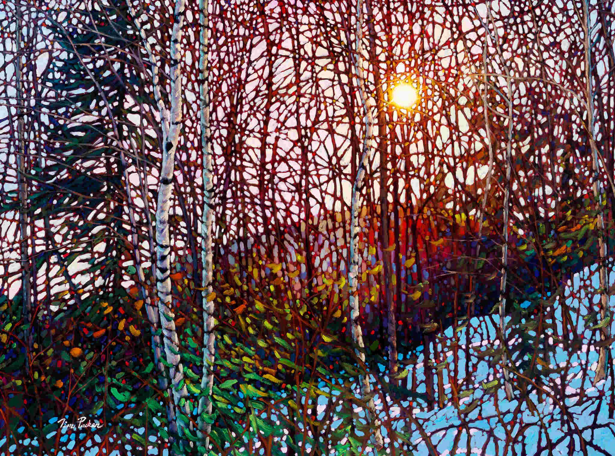 Morning Birches Mont Tremblant Tim Packer