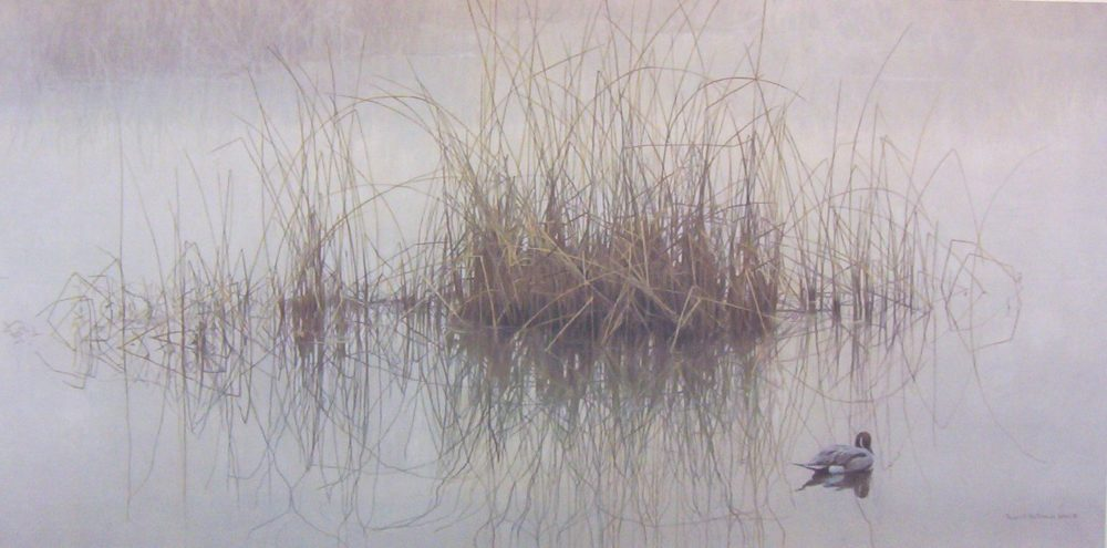 Morning Calm - Pintail - Robert Bateman