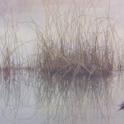 Morning Calm - Pintail - Robert Bateman