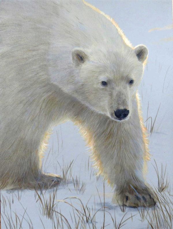 Morning Stroll Polar Bear Terry Isaac