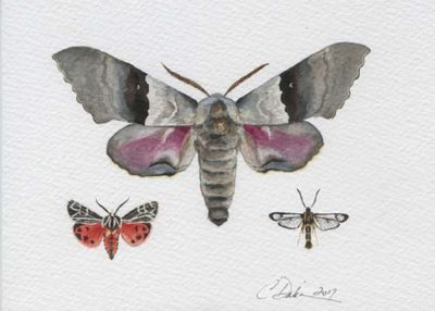 Moth Collection - Charity Dakin