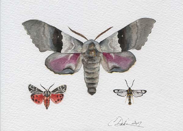 Moth Collection - Charity Dakin