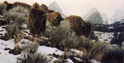 Mountain Echoes Bison Rod Frederick