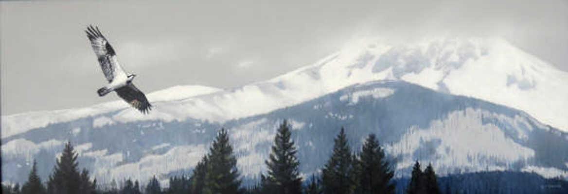 Mountain View Osprey Terry Isaac
