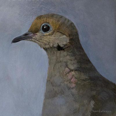 Mourning Dove - Alan Bateman