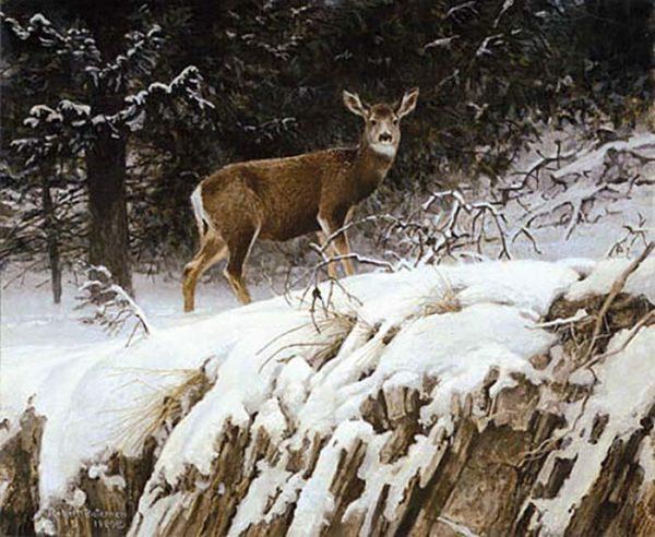 Mule Deer in Snow - Robert Bateman
