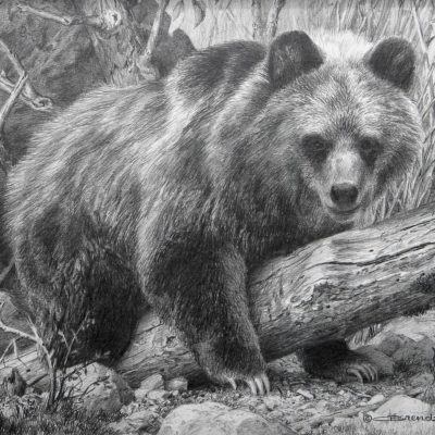 My Log - Grizzly Cub - Carl Brenders