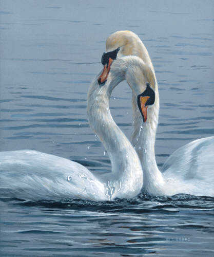 Necking Swans Terry Isaac