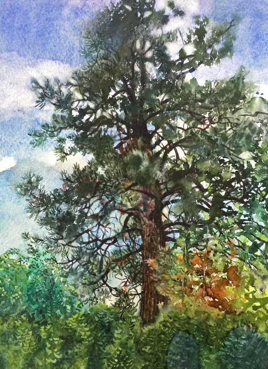 Neighbour's Pine - Nicoletta Baumeister