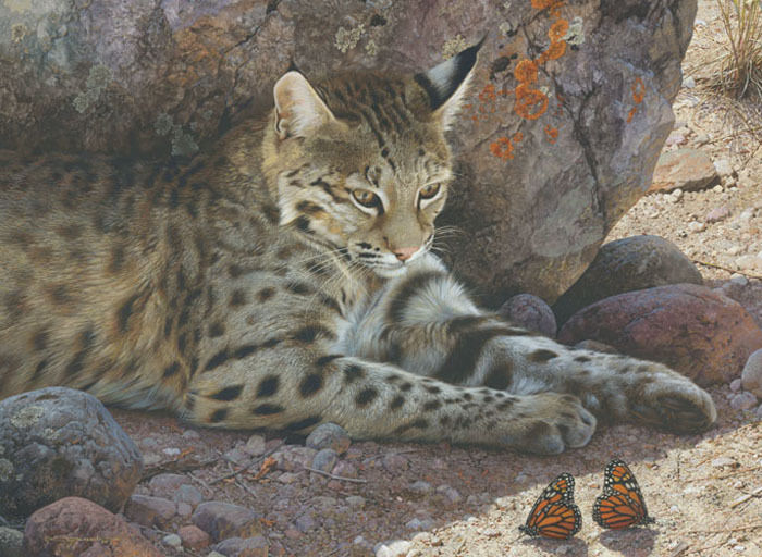 Off Limits Bobcat Carl Brenders