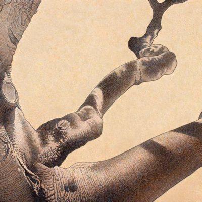Old Oak with Downy Woodpecker - Barbara Banthien