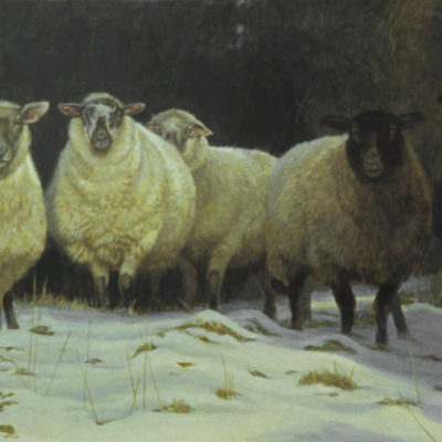 On Salt Spring Sheep Robert Bateman
