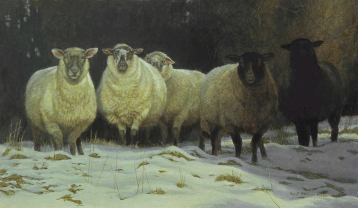 On Salt Spring Sheep Robert Bateman