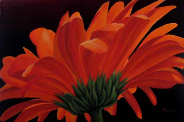 Orange Gerbera Dennis Magnusson