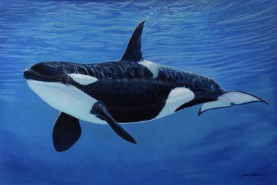 Orca - David Grant