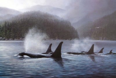 Orcas - Marla Wilson