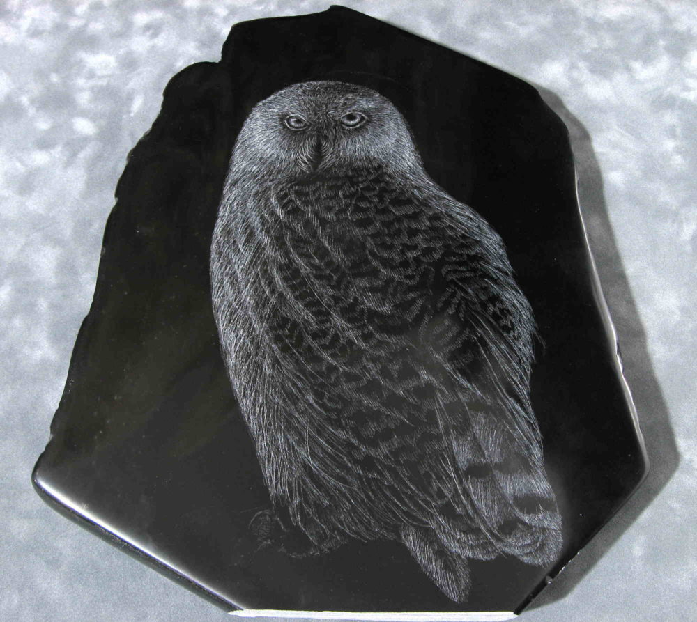 Owl Tim Frampton