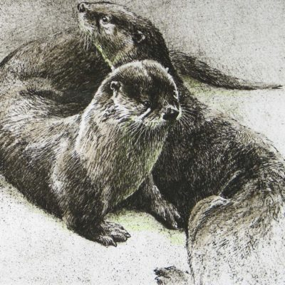 Pair of Otters - Etching - Robert Bateman