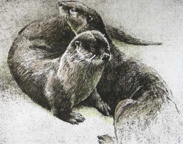 Pair of Otters - Etching - Robert Bateman