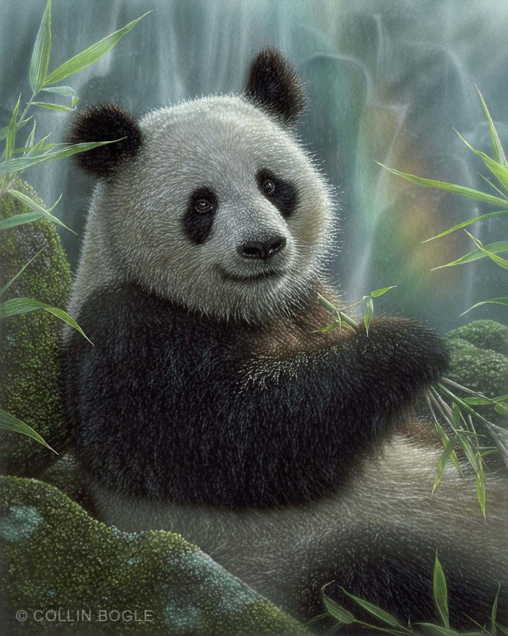 Panda Paradise - Collin Bogle