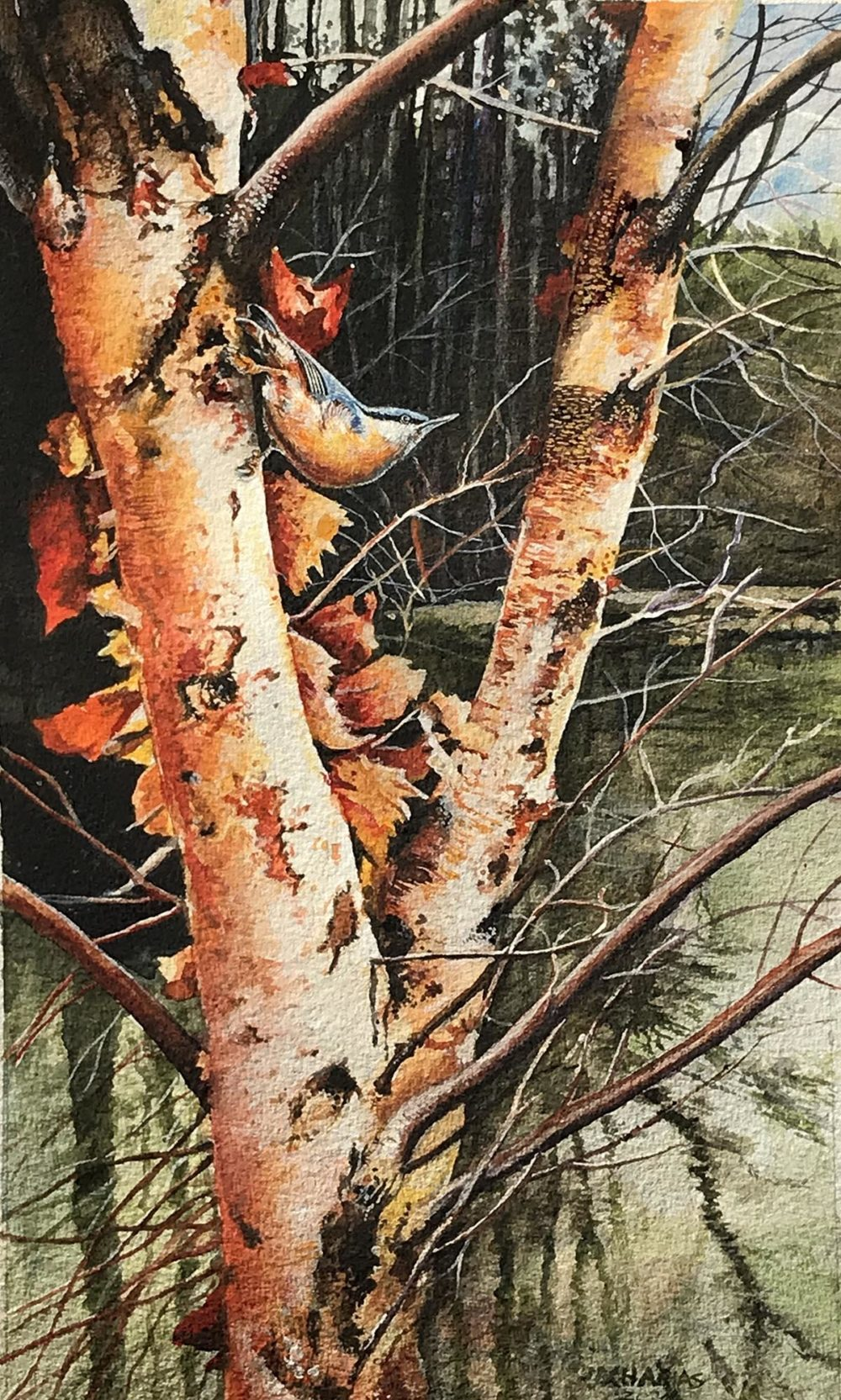 Paper Birch Home - John Zacharias
