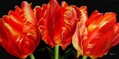Parrot Tulip Trio Dennis Magnusson