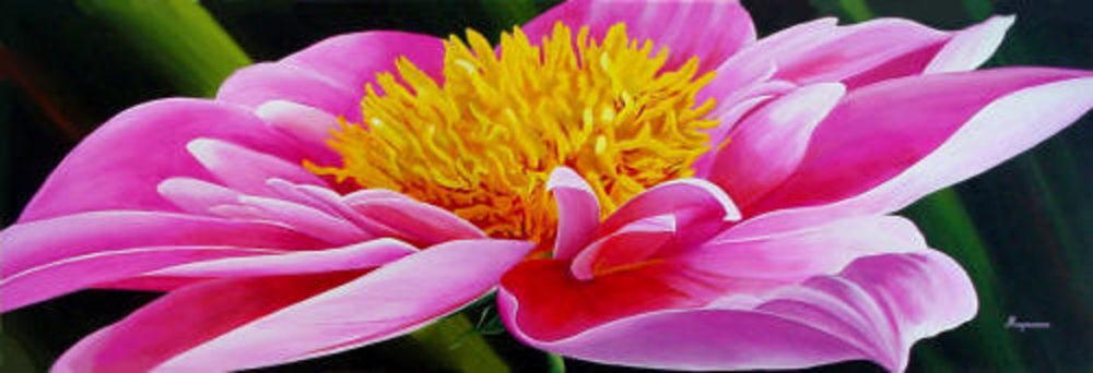 Pink Dahlia Dennis Magnusson